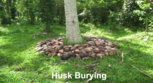 Hust burying