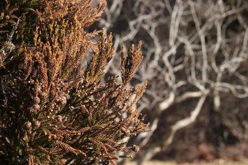 Island textures - they look like thread!