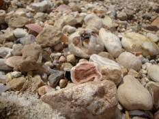 Treasures on Haifa's beach