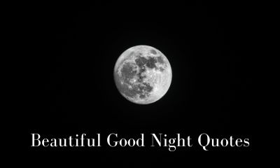 Good Night Quotes and Messages