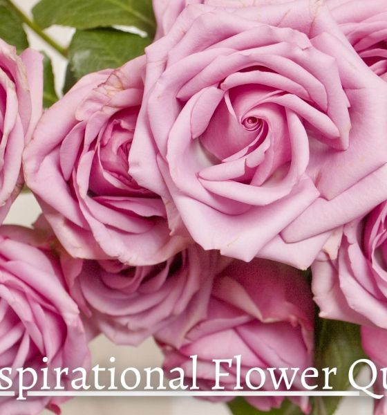 Beautiful Flower Quotes