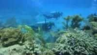 Plongée explo sur le récif de corail dans les Caraïbes, Mexique