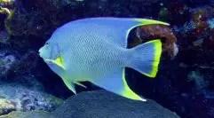 Plongée au Nitrox pour rallonger tes temps de plongée