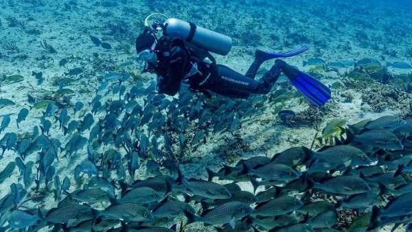 Scuba Diving Yucatan