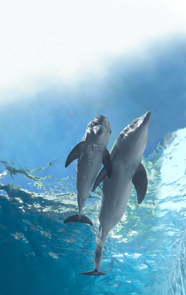 Hope and Winter in Dolphin Tale 2 (Warner Bros. Pictures, CR: Wilson Webb)