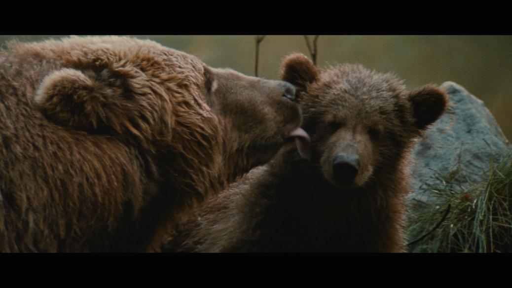 "Blu-Ray Pick: ""The Bear"" Is Exhilarating Filmmaking"