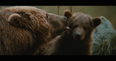 The Bear (Shout! Factory)
