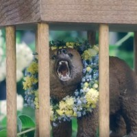 'Midsommar' Celebration Continues With 'Bear In A Cage' Collectible From A24!!