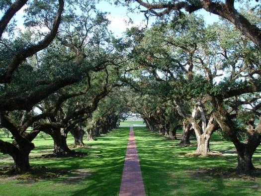 300-year-old oaks at Oak Alley Plantation, Vacherie LA