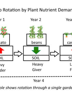 Rotation nutrient demand also crop systems for annual vegetables deep green permaculture rh deepgreenpermaculture