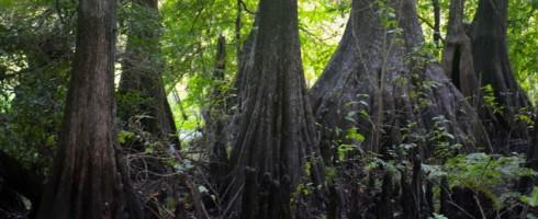 Cypress-Lakes-Preserve-2-690x458