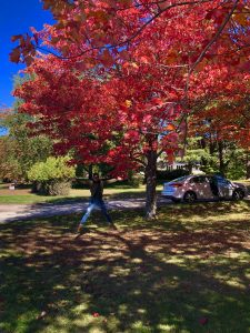 Fall foliage in Northern Maine