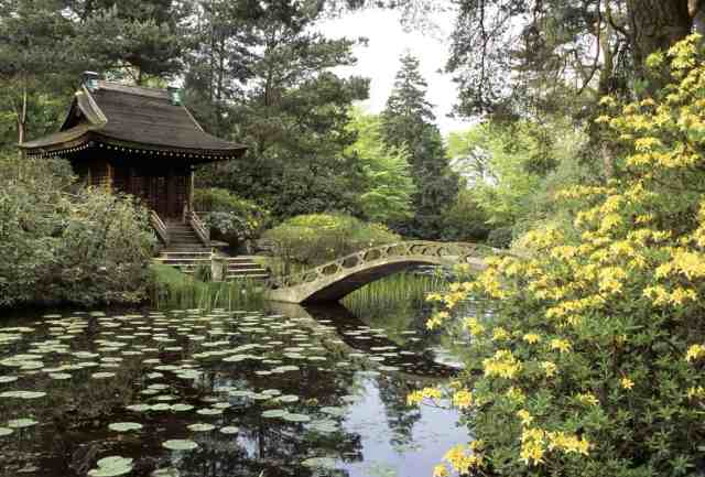 The Shinto Temple and Island seen with the Arched Bridge and full-bloomed Azaleas from across the water in the Japanese Garden at Tatton Park, Cheshire