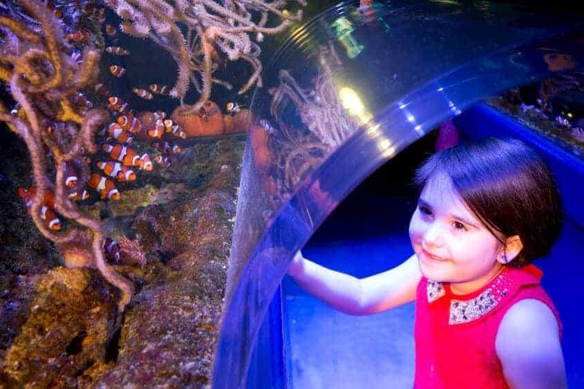 Clownfish Kingdom at The National Sea Life Centre Birmingham