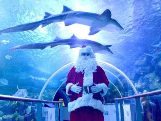 Santa in the 360 degree Ocean Tunnel at The National Sea Life Centre Birmingham