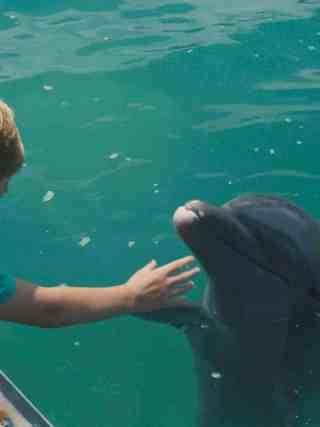 Dolphin Kick