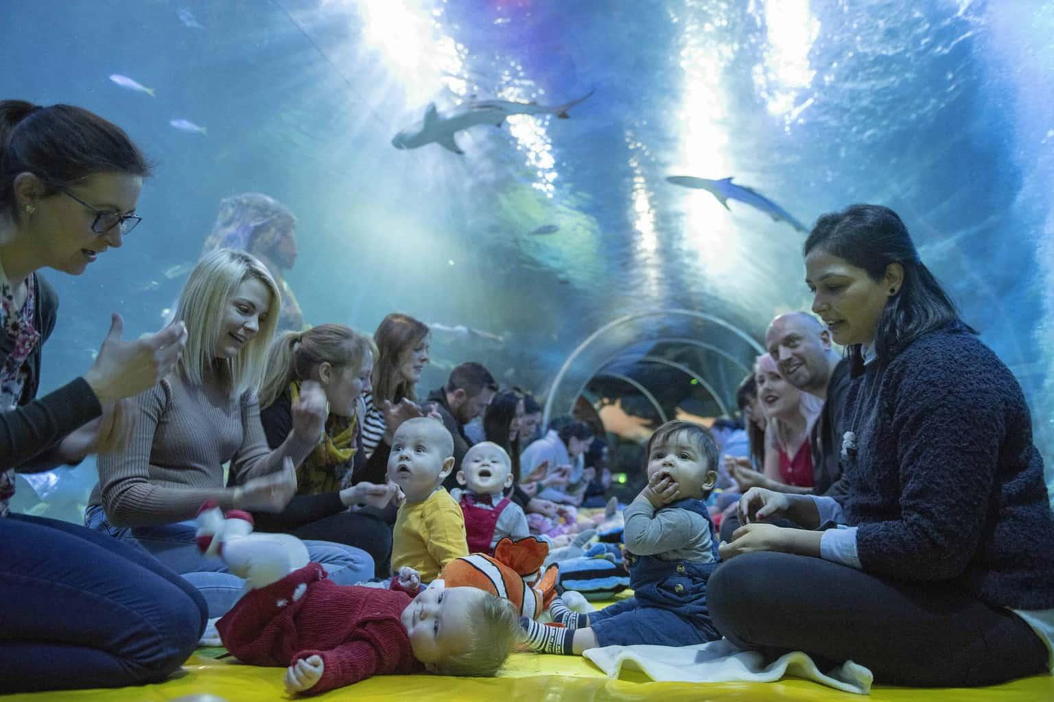 Sea Life Baby Sensory