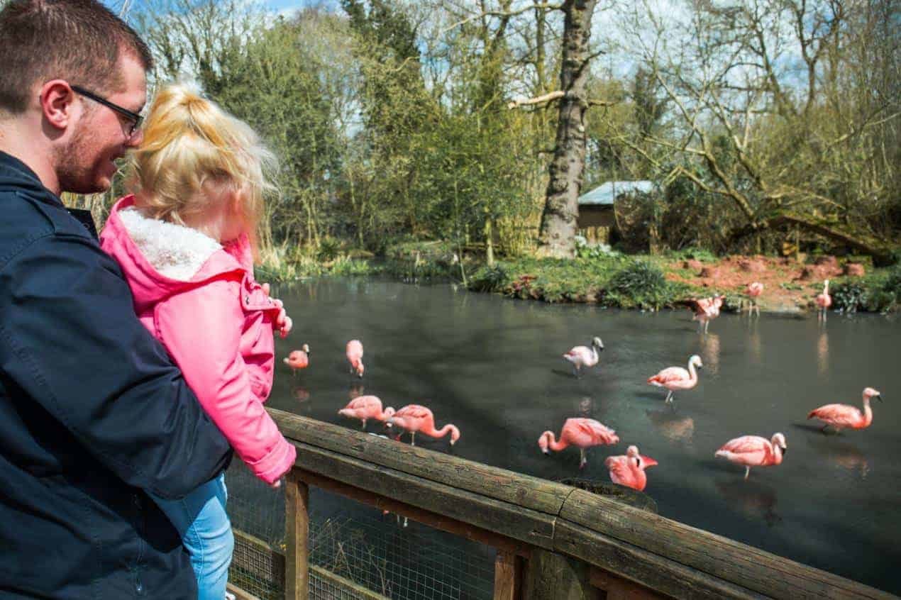 Twcyross Zoo offering super-affordable day out for families with under 5's