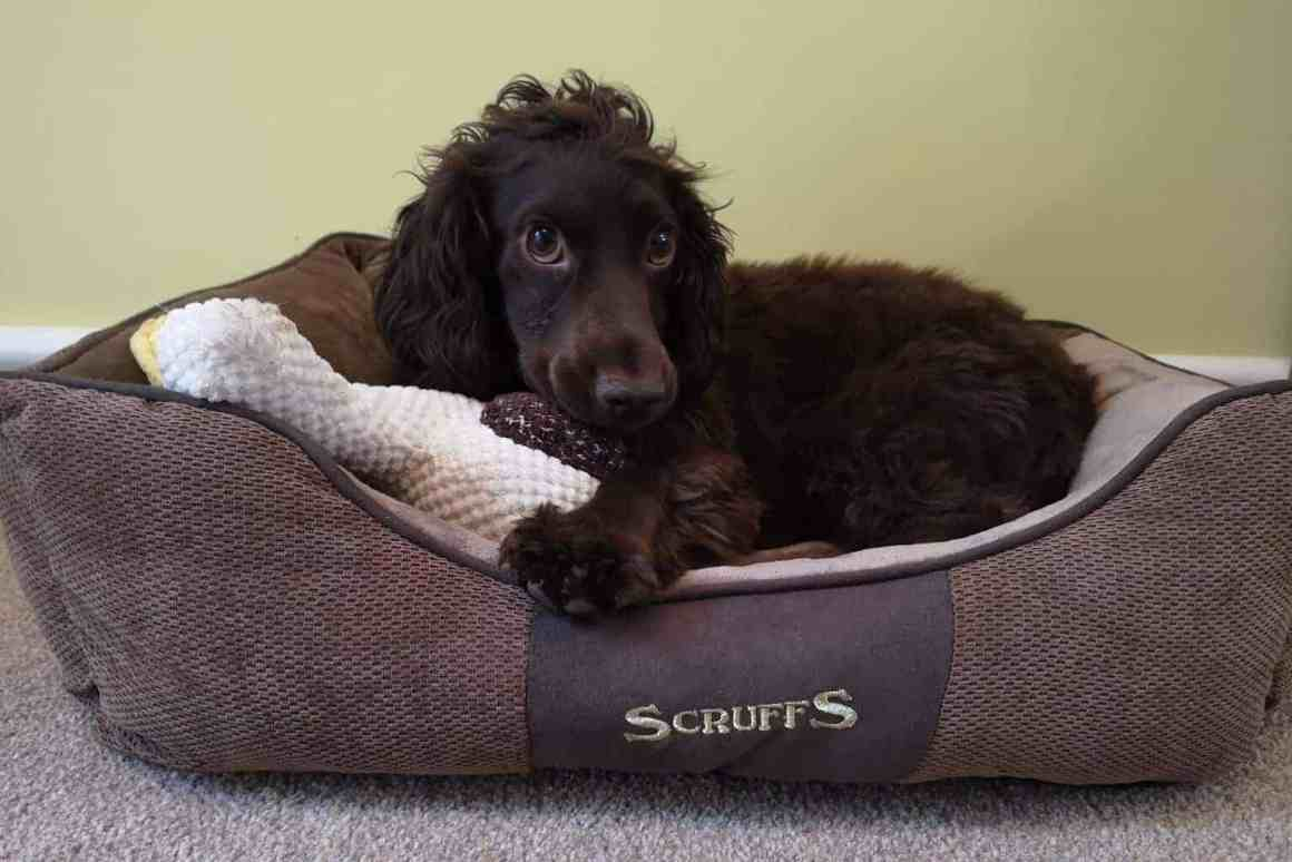 Scruffs Chester Box Dog Bed