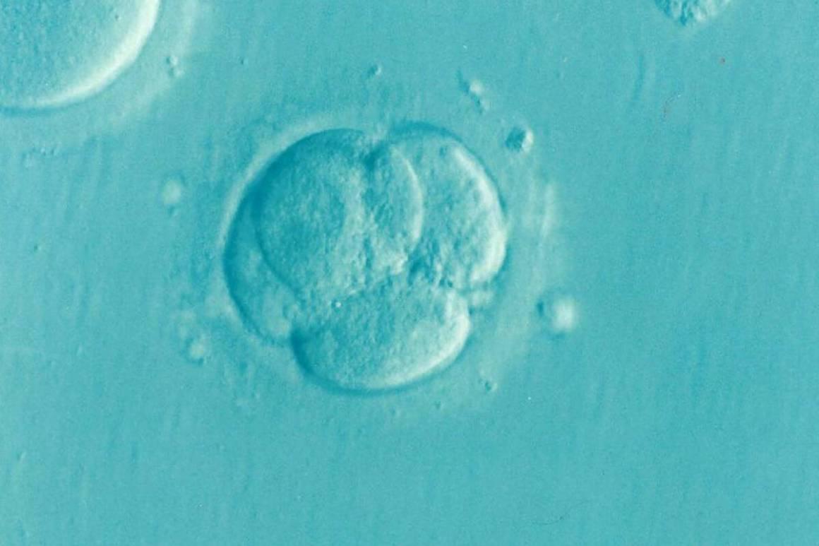 IVF fertilisation