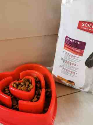 Hill's Science Plan Canine Food