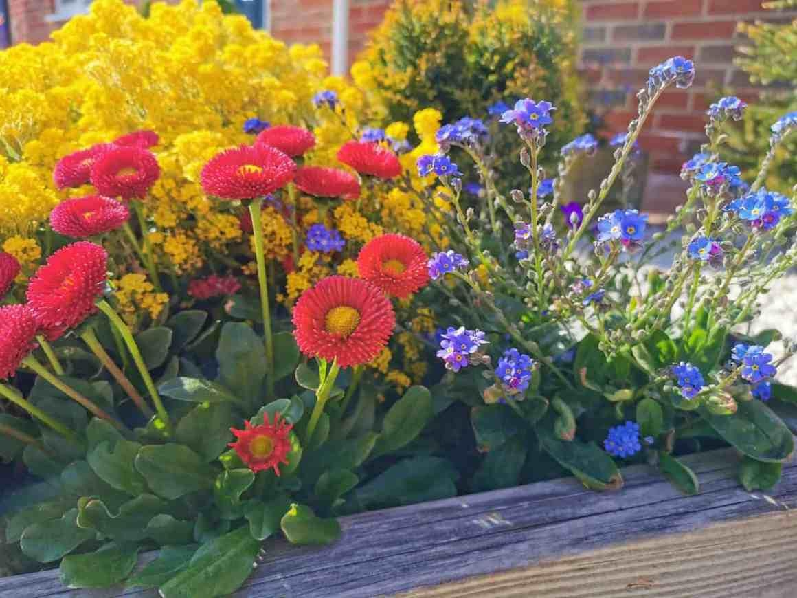 Lockdown Diaries - gardening