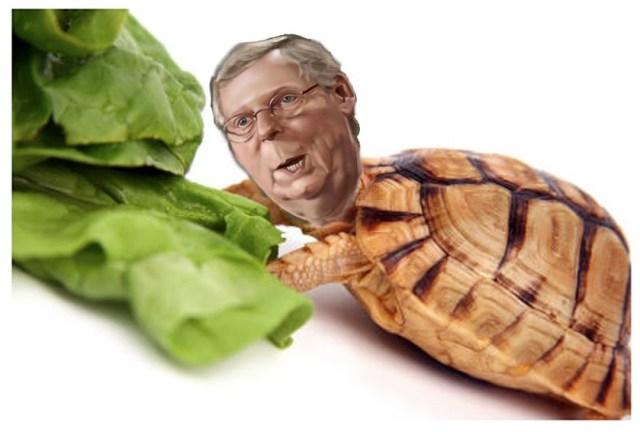 turtleMc1