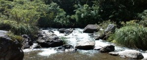 Acupuncture Harmonies: A Stream over Boulders