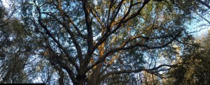 Acupuncture Harmonies: Branches Reaching to the Sky