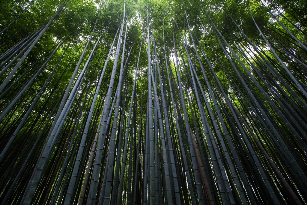 bamboo of the wood phase