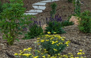 Landscape berm with perennial plantings in bloom with flagstone pathway