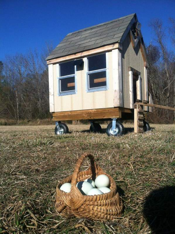 What Is A Chicken Tractor and Thoughts On Having Chickens, chicken coop on wheels, pastured eggs