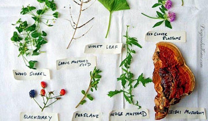 Joys of Foraging ~ Edible Wild Free Food, poisonous leaves, mushrooms, flowers, herbs, weeds, fatal error, inedible, harmful, wild foods, humble act,eating wild flowers, berries, nuts, greens, nature's grocery, emergency food, live off land, edible plants, poisonous plants,