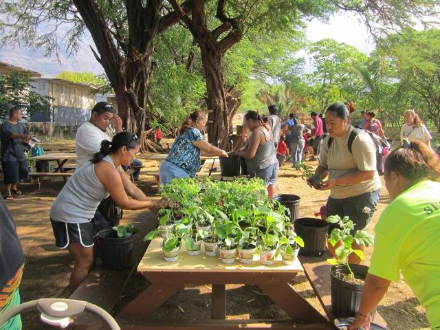 Corn planting at the Hoa ʻĀina O Mākaha school garden