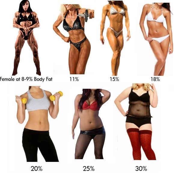 Tumblr inline noq yi    co  bodyfat chart visual women also bmi overweight and attractiveness christianity masculinity rh deepstrength wordpress