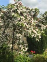 garden april 2017 - 17