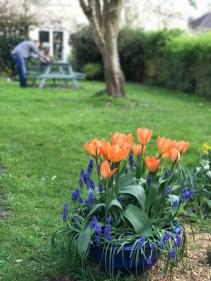 garden april 2017 - 56