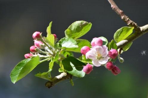 garden april 2017 - 81