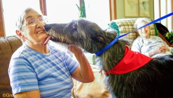 Therapy Dog The Scottish Deerhound Club Of America