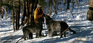 Photo of Deerhounds and owner taken by Jay Phinizy.