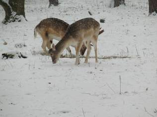 deer-1298334_640_2 Do You Know When To Plant Food Plot For Deer?