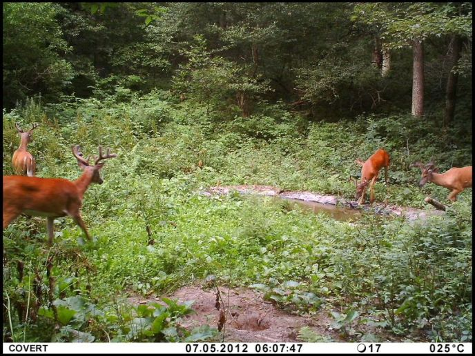 how to attract deer to your stand fast