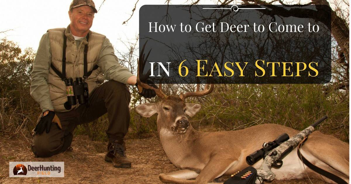 how to get deer come to you