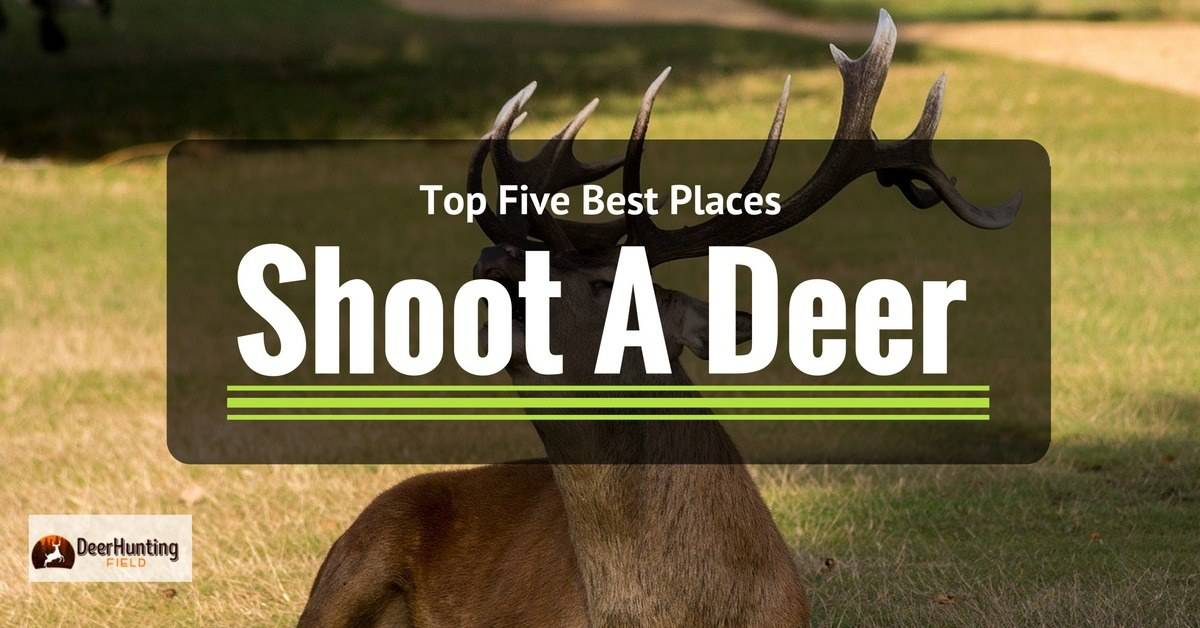 best place to shoot a deer