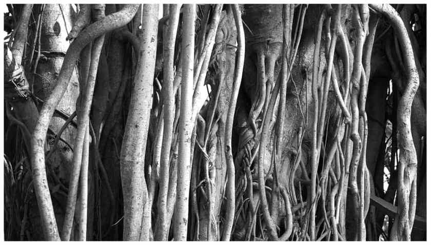 Tree Roots Background