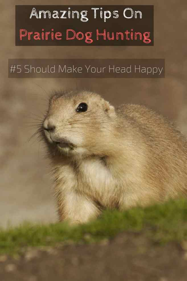 Amazing Tips On Prairie Dog Hunting (#5 Should Make Your Head Happy)