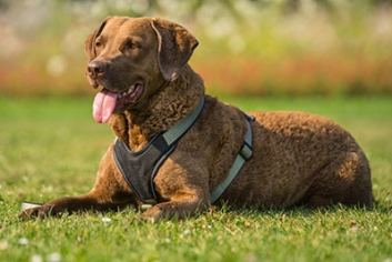 brittany-spaniel-518261_1280 The 7 Best Bird Dogs: Amazing Companions for Easy Hunting