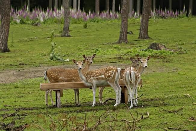 best automatic deer feeder