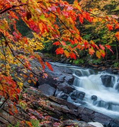 muskoka fall colours hot spots [ 2400 x 1350 Pixel ]
