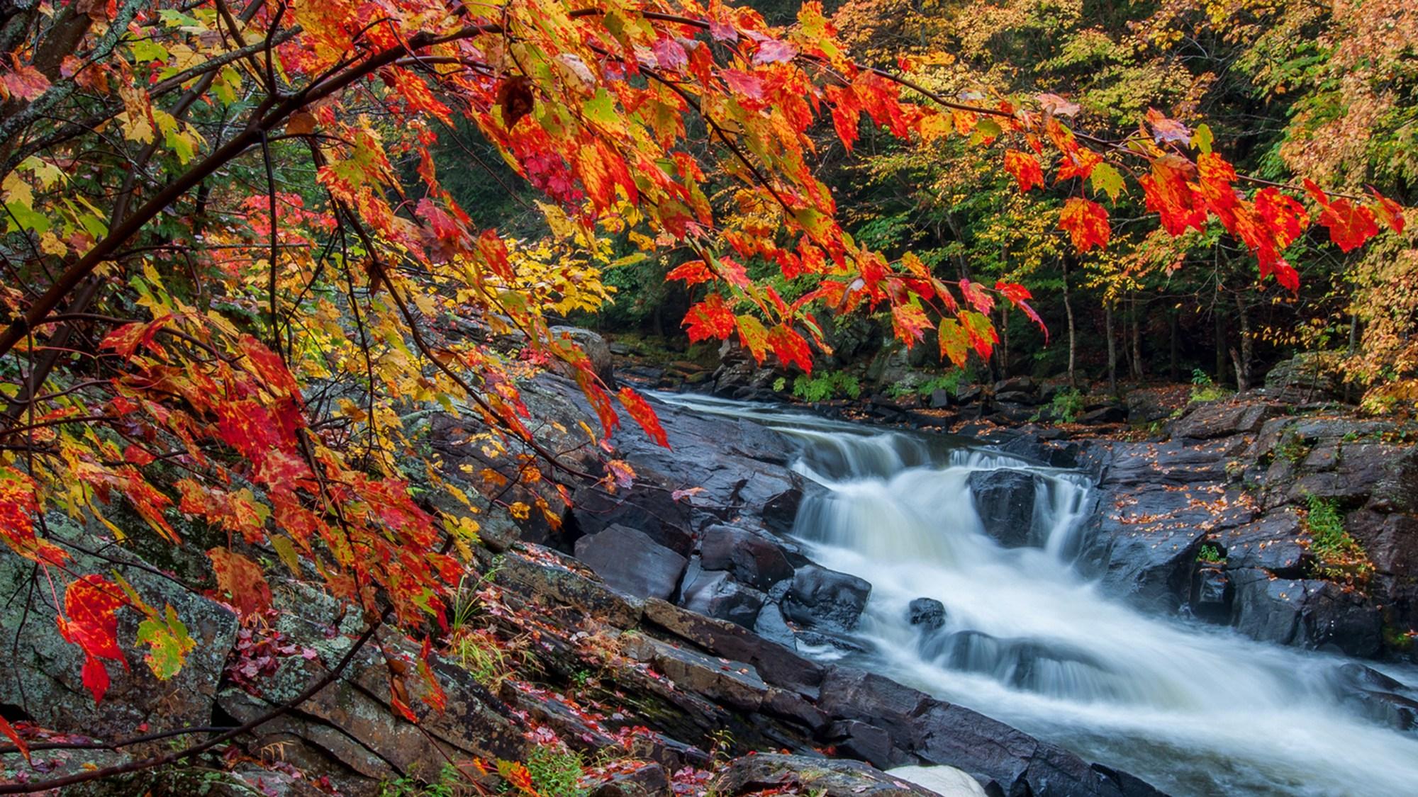 hight resolution of muskoka fall colours hot spots
